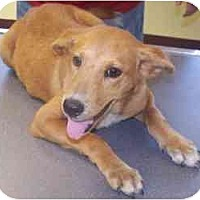 Adopt A Pet :: Missy - Raymond, NH