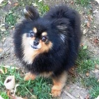 Adopt A Pet :: Brandi - Orange, CA