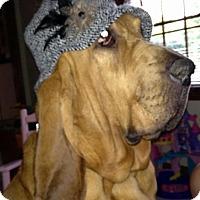 Adopt A Pet :: Deuce - Westerville, OH