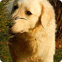 Adopt A Pet :: Karitsa - Caledon, ON