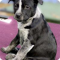 Adopt A Pet :: Arabella super outgoing - Sacramento, CA