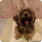 Adopt A Pet :: *JERRY