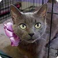 Adopt A Pet :: Gracie - Schererville, IN