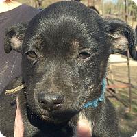 Adopt A Pet :: Ash AD 02-13-16 - Preston, CT
