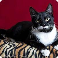 Adopt A Pet :: Lima - Merrifield, VA