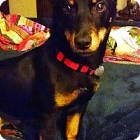 Adopt A Pet :: Bremo - Richmond, VA