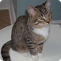 Adopt A Pet :: Molly - Verdun, QC