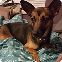 Adopt A Pet :: Dakota - Algonquin, IL