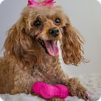 Adopt A Pet :: Autumn - Phelan, CA