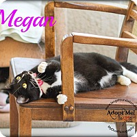 Domestic Shorthair Cat for adoption in Canyon Country, California - Megan