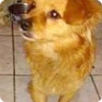 Adopt A Pet :: Coffee - Boulder, CO