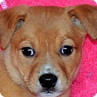 Adopt A Pet :: **CALEIGH** MEET JUNE 11TH! - Mukwonago, WI