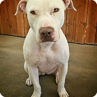 Adopt A Pet :: King - Santa Ana, CA