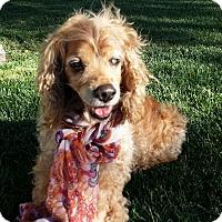 Adopt A Pet :: Maddie - Santa Barbara, CA