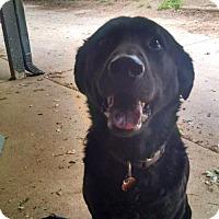 Adopt A Pet :: Rosie - Wylie, TX