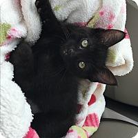 Adopt A Pet :: Russia - Orange, CA