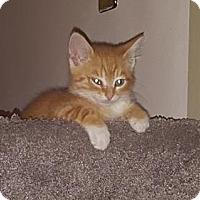 Adopt A Pet :: Phoenix - Lancaster, PA
