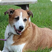 Adopt A Pet :: Carrie - Elyria, OH
