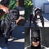 Adopt A Pet :: Rocky - Lincoln, CA