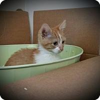Adopt A Pet :: Grace - Rochester, MN