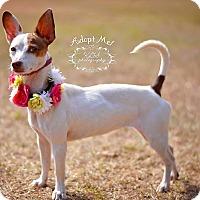 Adopt A Pet :: Ariel - Fort Valley, GA
