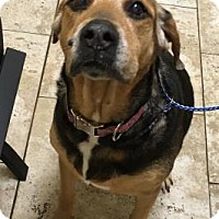 Adopt A Pet :: Delilah - Titusville, FL