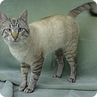 Adopt A Pet :: Cody - Olive Branch, MS