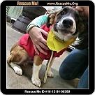 Adopt A Pet :: Billie Ray