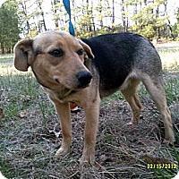 Adopt A Pet :: Mahogany - Dundas, VA