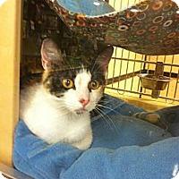 Adopt A Pet :: Kilee - Monroe, GA