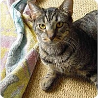 Adopt A Pet :: Splish - Jenkintown, PA