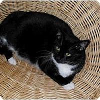 Adopt A Pet :: Sebastian  (NW) - Little Falls, NJ