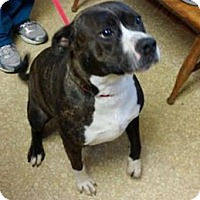 Adopt A Pet :: Keesha - Evergreen Park, IL