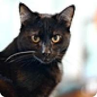 Adopt A Pet :: Alex - Vancouver, BC