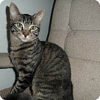 Adopt A Pet :: Jolie - Milwaukee, WI