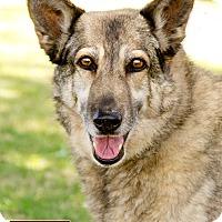 Adopt A Pet :: Dustee - Marina del Rey, CA