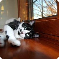 Adopt A Pet :: Marilyn - Blaine, MN