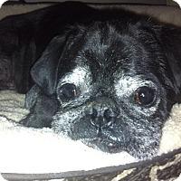 Adopt A Pet :: Giuseppe - Grapevine, TX