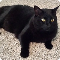 Adopt A Pet :: Blackie - Encinitas, CA