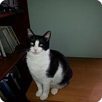 Adopt A Pet :: Gretel (courtesy) - Orlando, FL