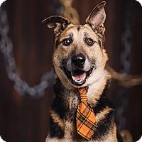 Adopt A Pet :: Remy - Portland, OR