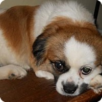 Adopt A Pet :: Henry - Pardeeville, WI