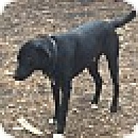 Adopt A Pet :: ROBBINS - CHAMPAIGN, IL