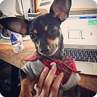 Adopt A Pet :: Cullen - San Diego, CA