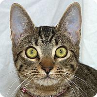 Adopt A Pet :: Teddi M - Sacramento, CA