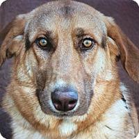 Adopt A Pet :: QUINCY VON QUARTZ - Los Angeles, CA