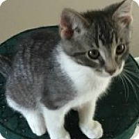 Adopt A Pet :: Katness - McHenry, IL