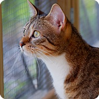 Adopt A Pet :: Minnie - Maynardville, TN
