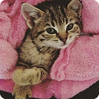Adopt A Pet :: Irene Wood (and Bob Fosse) - Marlborough, MA