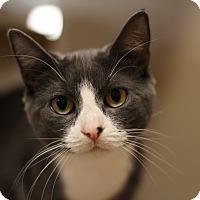 Adopt A Pet :: Bailey - Richmond, VA